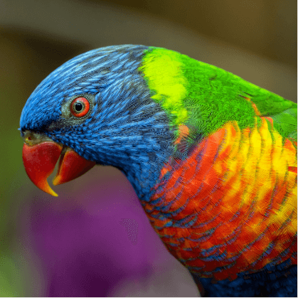 Oiseau david clode G7Jd9fMuRHs unsplash 1