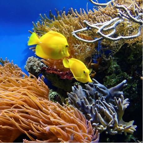 corail Australie PIXABAY 1355474 2