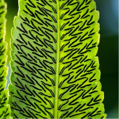 plante david clode B2JUvo192ys unsplash 1