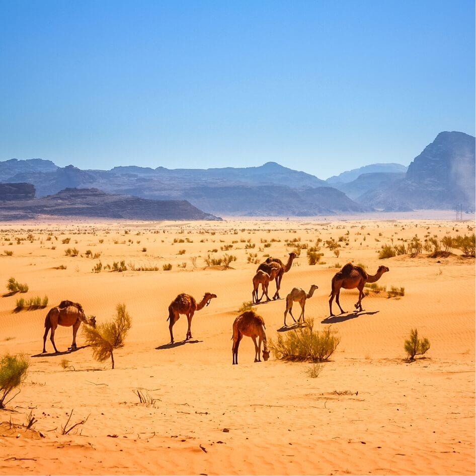 desert WadiRum jordanie